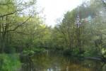 Rzeka Piaśnica